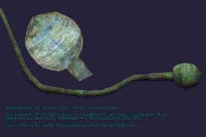 Gewandnadel aus der Bronzezeit
